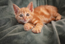 Cute Little Ginger Kitten Lying On A Blanket At Home