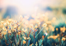 Vintage Little Flowers Background On Sun