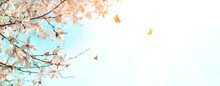 Banner. Magnolia Flowers On Tree With Flying Butterflies Against Blue Sky. Spring Background. Soft Focus