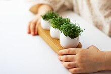 Little Girl Holding Cress Saladin Eggshell In Her Hands.Fresh Sprouted Green Sprouts. Green Cress Salad In Eggshell. Fresh Greens. Green Sprouts. Preparing For Easter.