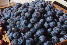 Bunch Of Fresh Blue Plums At The Market On A Sunny Day. Healthy Fruits. Horizontal Photo. Farmers Products.