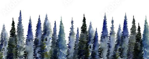 Fototapeta watercolor drawing fir trees obraz