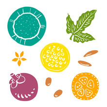 Coconut, Passion Fruit, Mangosteen, Citrus Slices. Colorful Sketch Collection Of Tropical Fruits And Flowers Isolated On White Background. Doodle Hand Drawn Fruit Icons. Vector Illustration