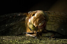 A Close Up Of A Dragonfly