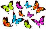 butterfly757