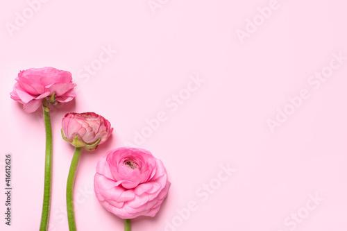 Fotografija Beautiful ranunculus flowers on light pink background, flat lay