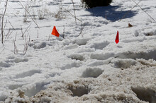 Orange Marker Flags In Snow Marking Wires Underground