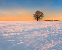 Winter Landscape With Bare Tree In Snow Covered Field At Sunrise