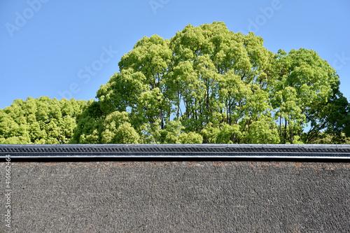 Carta da parati 上賀茂神社 庁屋の茅葺の屋根と新緑 京都市