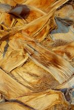 Palm Tree Texture. Tree Bark Background. Exotic Tree Pattern. Summer Texture. Palm Tree Trunk Texture.