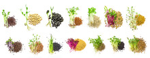 Collage Of Different Microgreens On A White Background. Selective Focus.