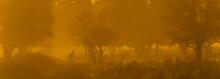 Golden Misty Morning In The Bush