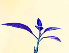 Plant With Leaves Toned In Blue Violet Color On Light Yellow Background, Abstract Background With Copy Space, Twig With Leaves In Ultramarine Color