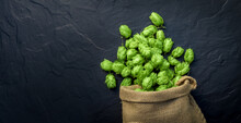 Beer Brewing Ingredients, Hops, Scattered Out Of A Fallen Sack. Beer Brewery Concept. Oktoberfest Background.