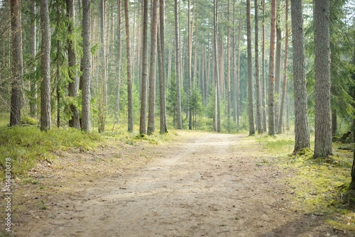 Fotografia Rural road through the evergreen forest