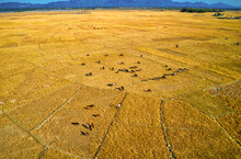 Aerial View Of Two People Walking In A Vast Field With Cattle, Teknaf, Chittagong, Bangladesh.
