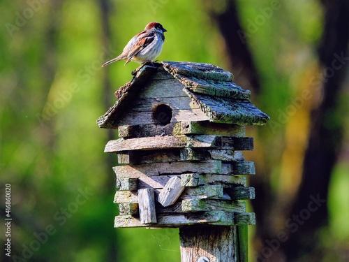 Photo Sparrow on rustic birdhouse