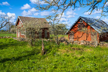 Red Farm Buildings By An Overgrown Garden In The Spring