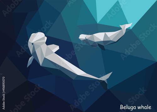 Valokuvatapetti Beluga whale