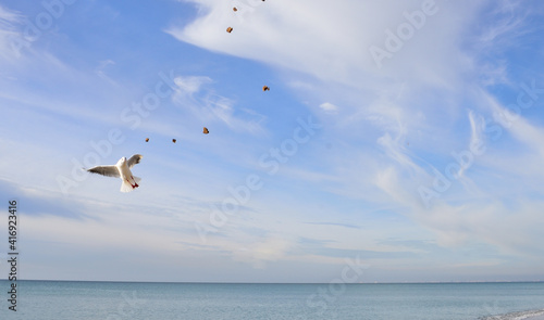 The seagull deftly catches pieces of bread tossed in the air Fototapet