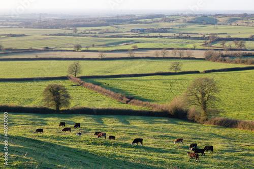 Fototapeta UK fields and hedgerows in Buckinghamshire England obraz