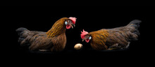 Two Chickens Are Sitting Near A Golden Egg And Talking On A Black Background, Fairy Tale Plot