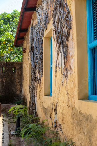 Old prison building on Turtle Island in Zanzibar. Interesting architecture among tropical plants. Dried tree roots on the wall of a building. Blue windows Wall mural