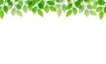 5月の新緑のフレームベクターイラスト(コピースペース、バナー)
