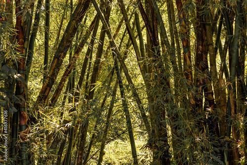 Mata Bambu Florestas Paisagens