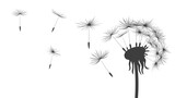 Fototapeta Dmuchawce - Silhouette of blowing on a dandelion with flying fluff seeds