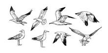 Set Of Seagulls Outlines. Hand Drawn Illustration Converted To Vector. Black On Transparent Background