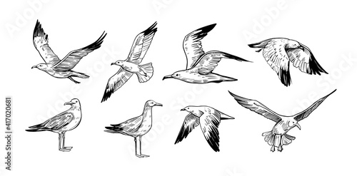 Stampa su Tela Set of seagulls outlines