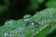 Water Drops On Plants And Leaf Close Up Macro