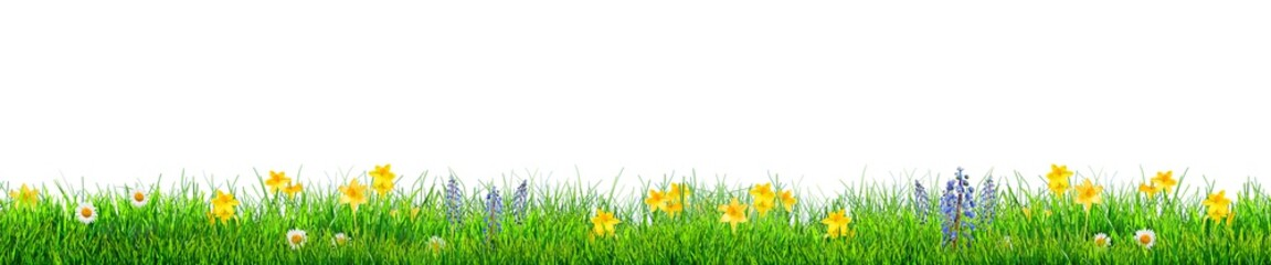 grass and spring flowers background