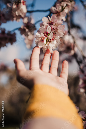 unrecognizable woman hand touching almond tree flowers at sunset in park Fotobehang