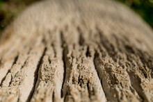 Beautiful Texture Of The Big Coconut Palm Trunk
