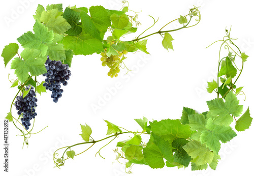 Canvas Encadrement de vigne, fond blanc