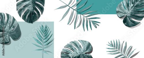 Tapety Minimalistyczne  tropikalne-liscie-palmowe-z-gory-lezace-plasko
