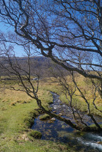 A Stream Near Loch Assynt And Ardvreck Castle