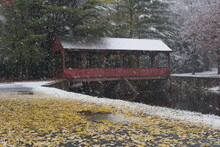 Stratton Brook State Park Simsbury Connecticut.  Snowflakes Blanket A Red Wooden Covered Bridge And A Path Filled With Blowing Yellow Leaves.