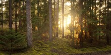 Pathway Through The Hills Of Majestic Evergreen Forest. Mighty Pine, Spruce Trees, Moss, Plants. Finland. Soft Golden Sunset Light. Idyllic Autumn Scene. Nature, Seasons, Environment, Ecotourism