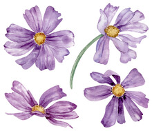 Watercolor Set Of Purple Summer Flowers. Hand-drawn Floral Clipart Isolated On The White Background.