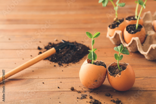 Canvas Egg shell with seedlings on wooden table
