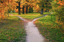 A Wide Trail Strewn With Fallen Autumn Foliage Is Divided Into Two Paths That Diverge In Different Directions. Autumn Landscape.