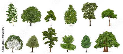 Realistic Trees Icon Set Fotobehang