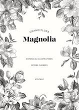 Magnolia. Spring Flowers. Vector Vintage Botanical Illustration. Invitation. Black And White