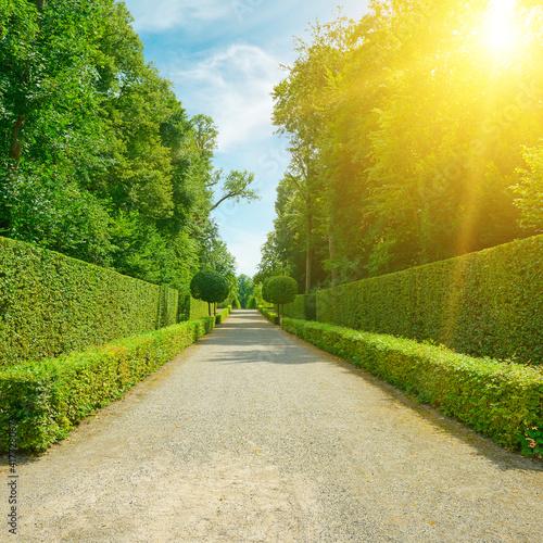 Bright sun illuminates the alley in the city's public park © Serghei Velusceac