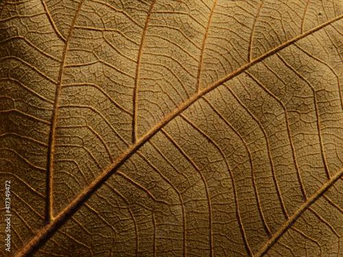 Billede på lærred dry brown leaf texture, natural background