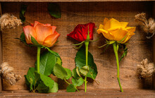 Close Up View Of Three Orange Rose And Red Roses In A Wood Basket. Floral Photography Detail.