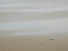 Wet Sand Beach After Low Tide